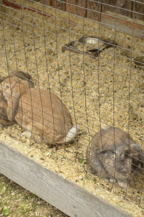 Bunnies at the Orchard: Apple Picking: A Fun Fall Activity for Kids & Families!